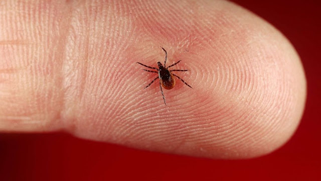 Recognize the Symptoms of Lyme Disease As Experienced Justin Bieber