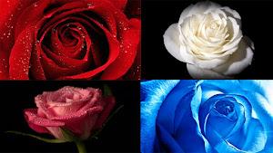 100 Gambar Wallpaper Bunga Mawar HD Untuk PC, Desktop, Laptop