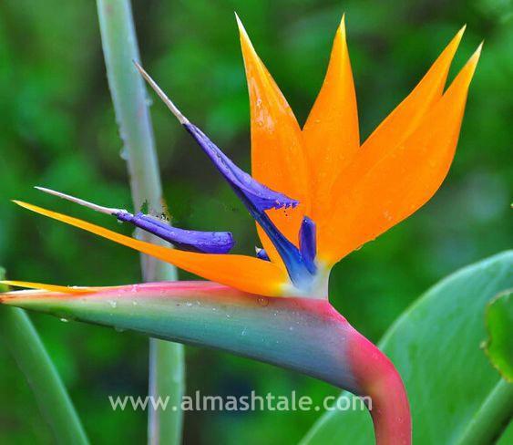 اجمل زهور العالم