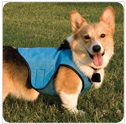 Dog Boutique Designer Dog Clothing And Accessories For