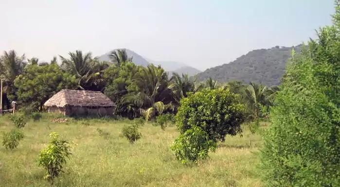 Agriculture land For Sale at Palamedu