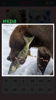651 слов медведь в зубах несет рыбу с икрой 2 уровень