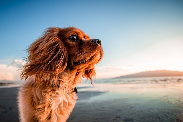 dog wallpaper download
