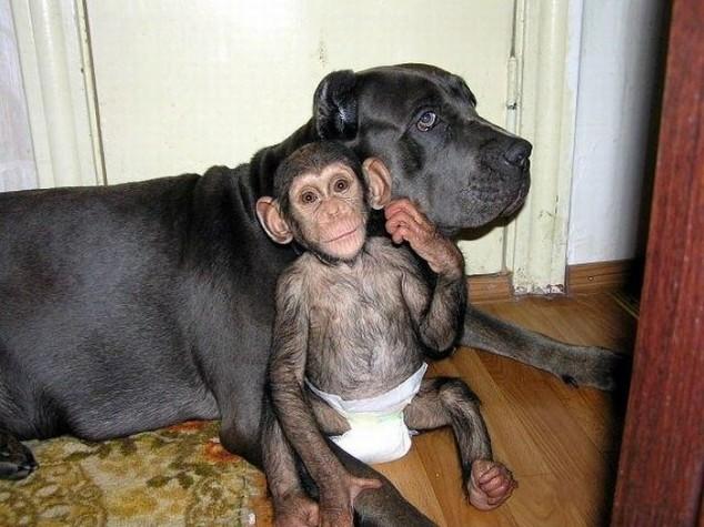 От этого малыша отказалась нерадивая мамаша, но неожиданно его «усыновила» собака