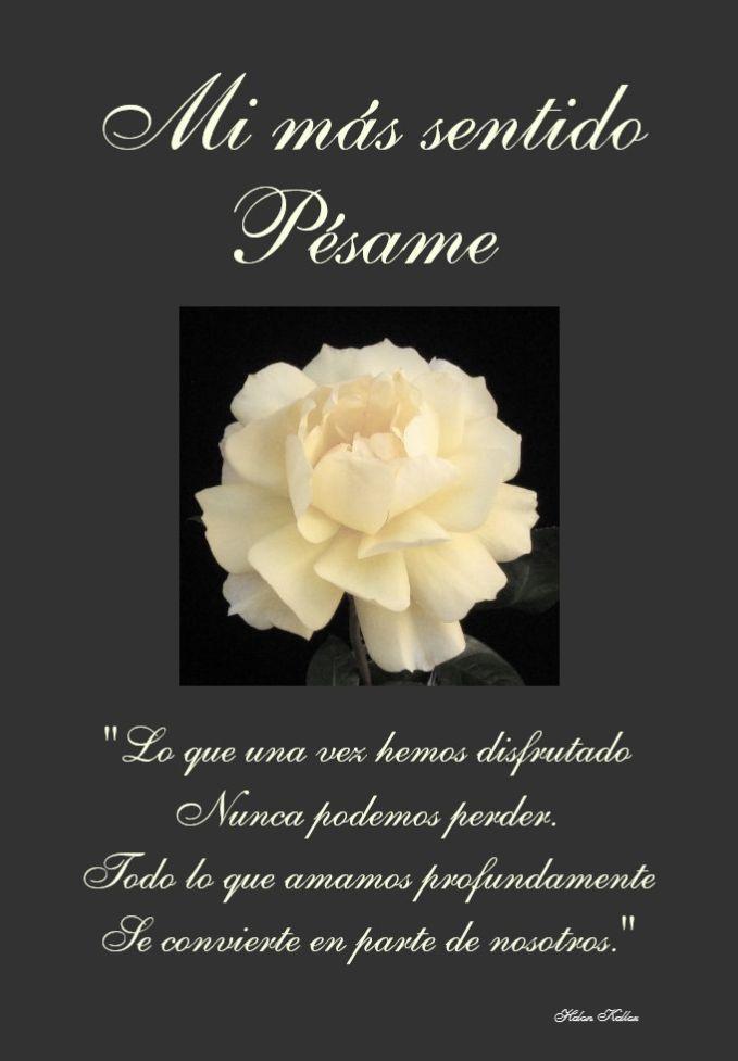 Banco De Imagenes Y Fotos Gratis Tarjetas De Pésame Con Flores 1