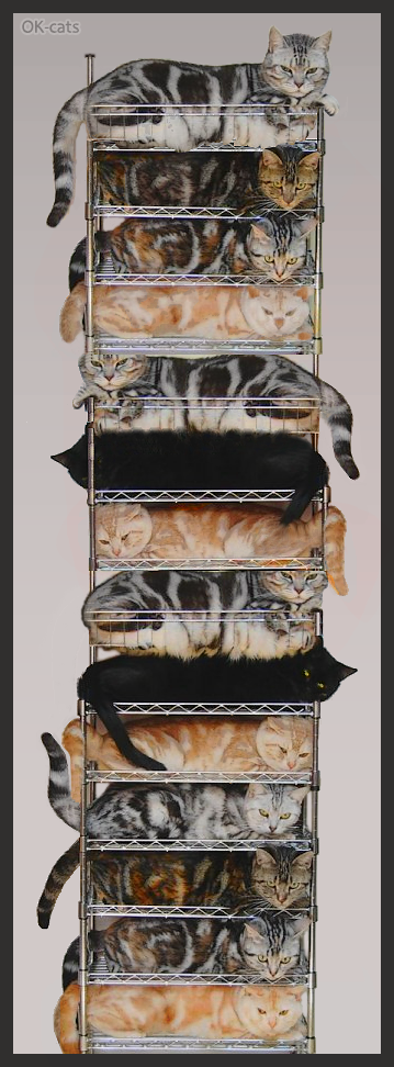 Photoshopped Cat Picture • Crazy cat lady found an amazing way to store her 14 ♥ beloved cats