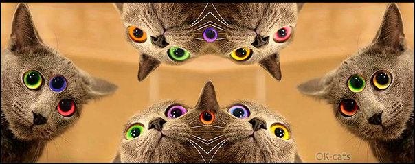 Photoshopped Cat picture • Mutant cats with multiple colorful eyes are back and they are legion