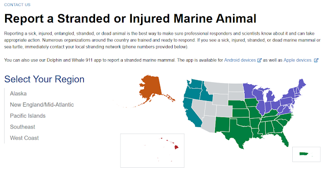 NOAA, Marine Animal, Report Injured Marine Animal, Dolphin and Whale 911 app, US links, Southeast, Fisheries, Florida, East Coast, Surf Fishing, FWC,