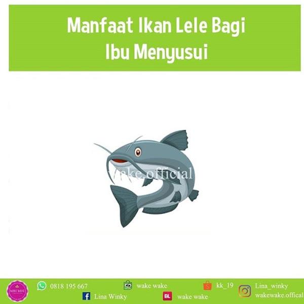 Manfaat Ikan Lele BagI Ibu Menyusui
