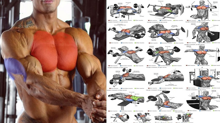 Chest-And-Triceps-Superset-Workout-Programme