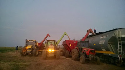 Por el mal estado de los caminos, en un campo de La Pampa sacan la cosecha en tren
