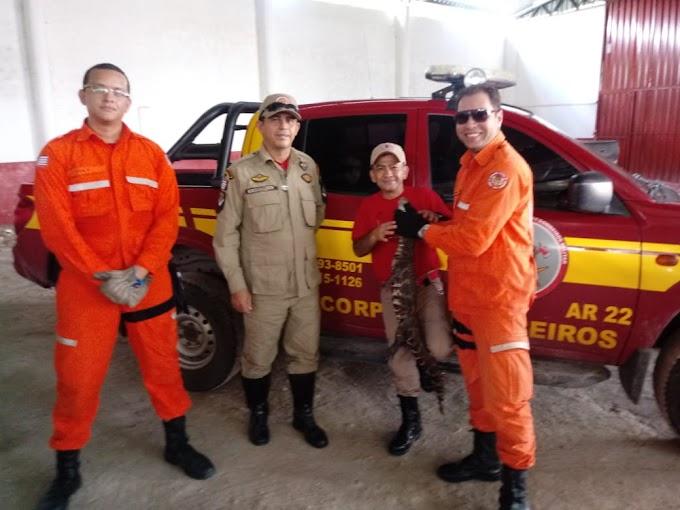 Bombeiros resgatam jacaré no bairro Boa Vista