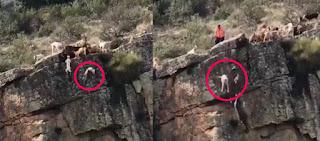 Σάλος στην Ισπανία: 12 σκυλιά κατασπαράζουν ελάφι και τα μισά κάνουν «βουτιά θανάτου» στο γκρεμό (βίντεο)