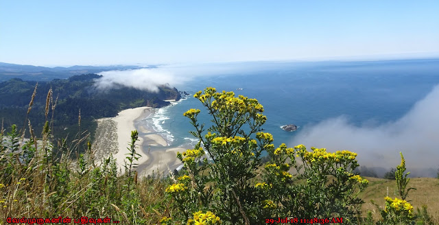 Cascade Head  Forest Scenic Research Area