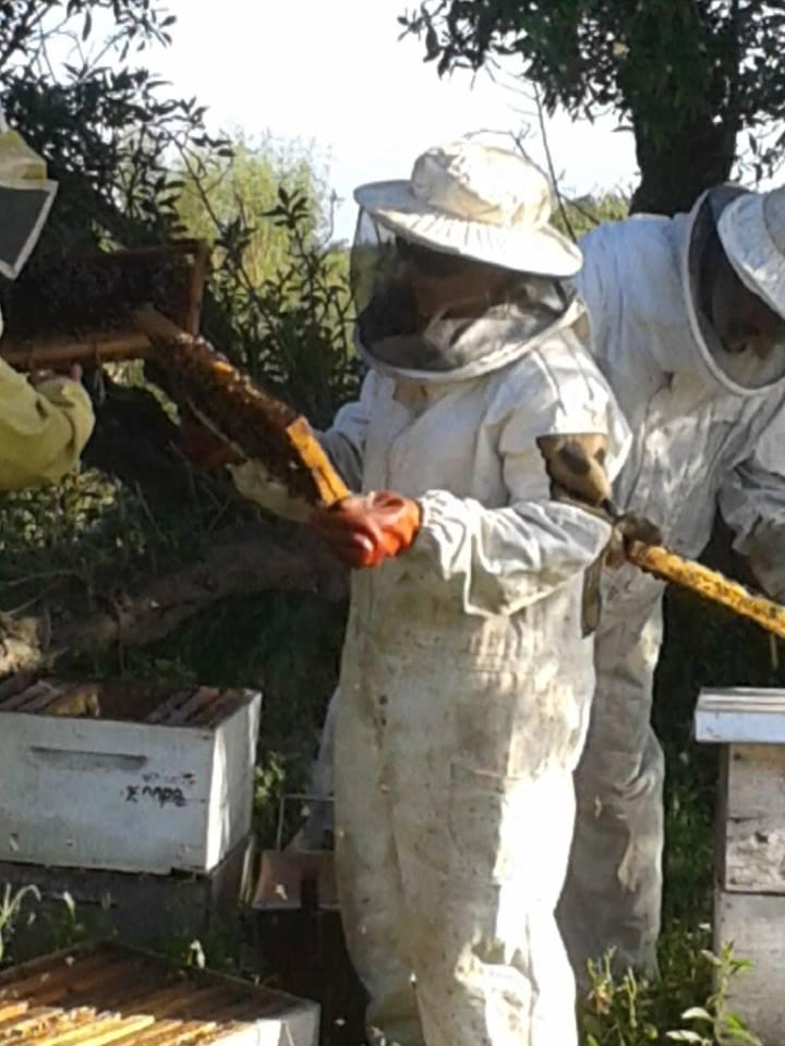 Resultado de imagen para Uruguay: Uso de agro-tóxico devastó colmenas apícolas