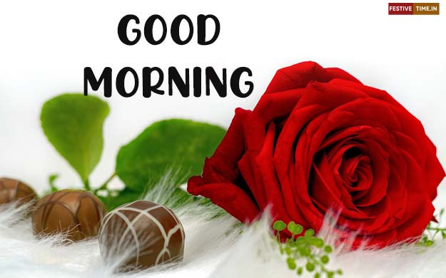 HD red rose good morning images | good morning rose wishes