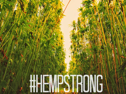 Back in Business with the Hemp Comeback?         |          Merely stardust web design agency