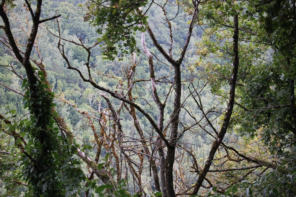 lesy v okolí Nového Hrádku u Lukova
