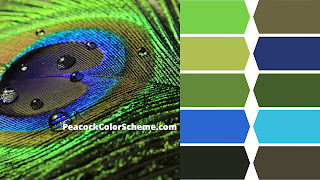 peacock color images, peacock colors