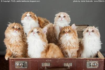 http://lalellecats.blogspot.com/p/litter-a.html