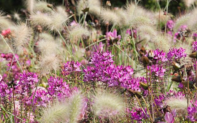 Landesgartenschau Bad-Lippspringe Blumen