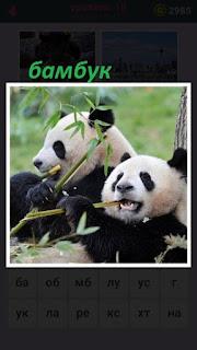 655 слов две панды едет бамбук  с листьями 18 уровень