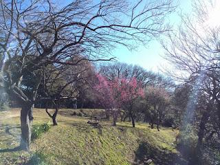 梅のつぼみがチラホラ見える木々