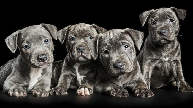 Pawtraits by Ken Drake lead shot for the Dog Lovers Book Club January 2017