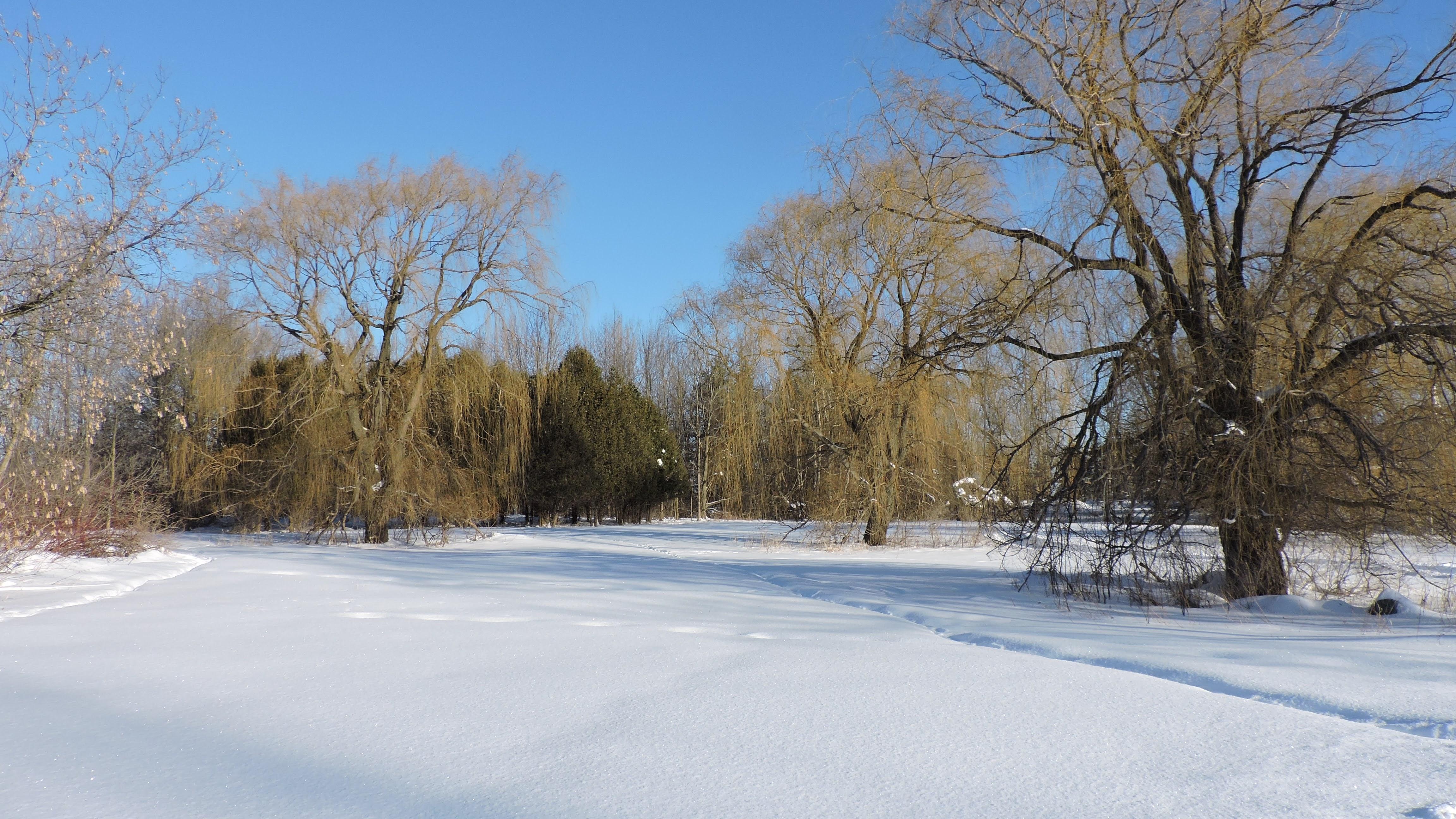 Parc-nature de Pointe-aux-prairies