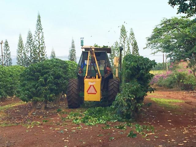 coffee pruning machine