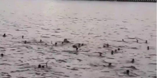 Tawuran di Jakut Dilakukan di Laut, Pelaku Saling Serang Pakai Sajam Sambil Berenang