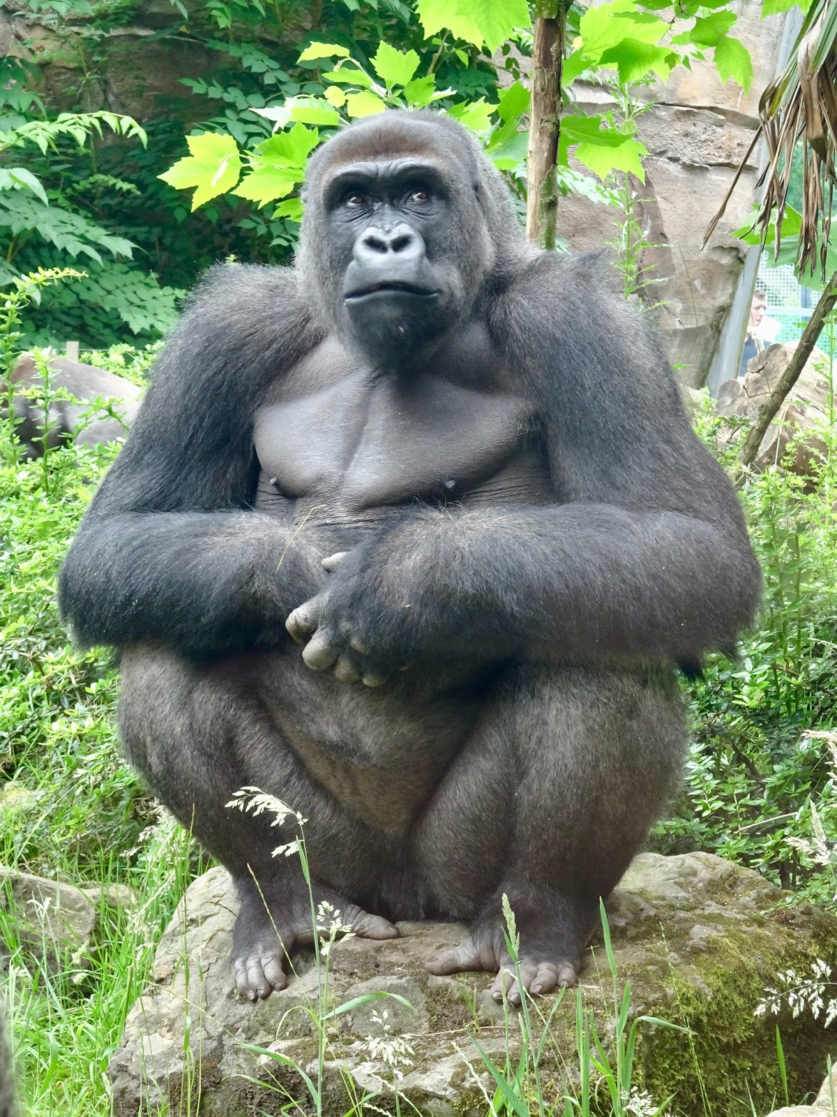 100+ Great Apes HD Pictures - World Most Intelligent 1st Animals