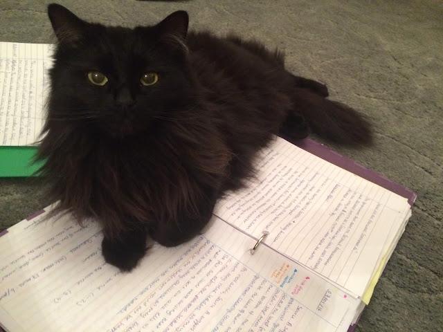 cb 2 - 10 Gatos pretos lendo livros