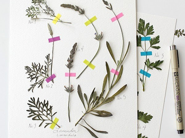 How to Make a Pressed Herb Wall Decor and other DIY Wonders