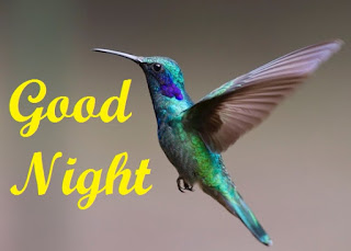 good night images with birds