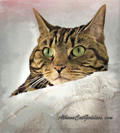 tabby cat portrait artwork