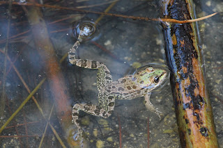 Frogs Plaka Antimachia Kos