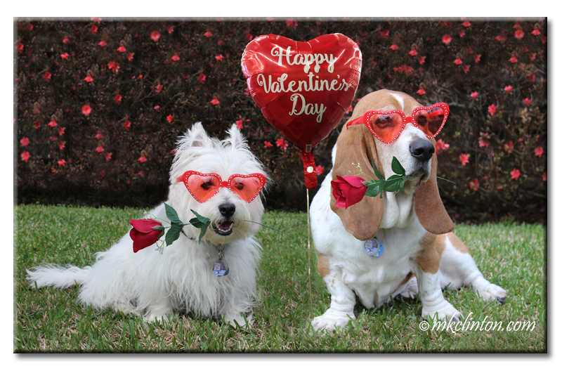 Westie and Basset Hound with heart-shaped glasses Photo Copyrighted MKCLINTON