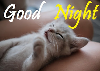 good night images with cute cats