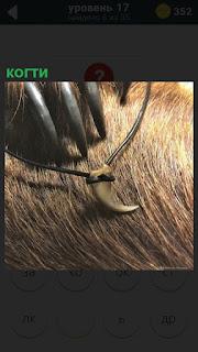 когти животного и клык в качестве талисмана на веревочке