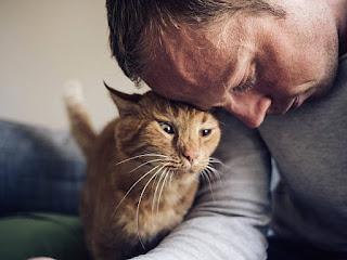 ¿Los gatos adoptan la personalidad de su dueño?
