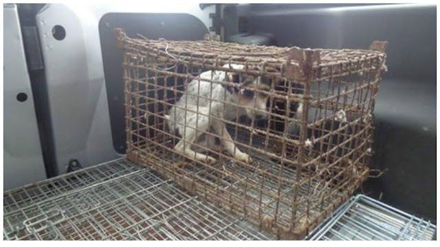 Собака Гусеничка провела всю жизнь в клетке и теперь не знает, как отблагодарить своих спасителей