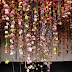 Rebecca Louise Law: flowers, love and art