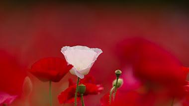 Flowerscapes: flores bellas y con detalle