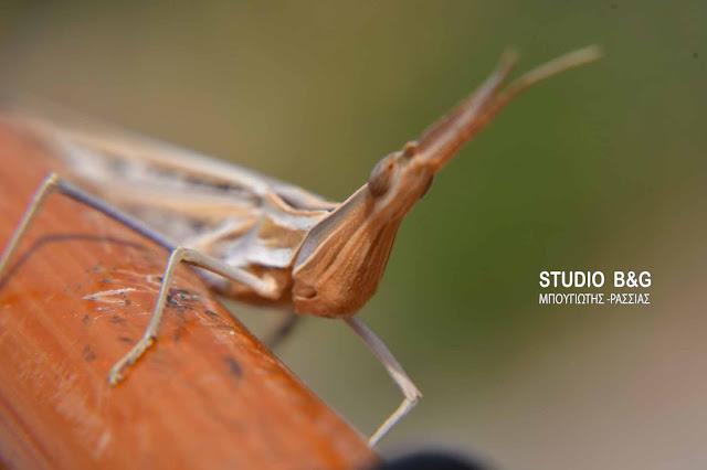Η φωτογραφια της ημέρας: Η ακανθώδης ακρίδα