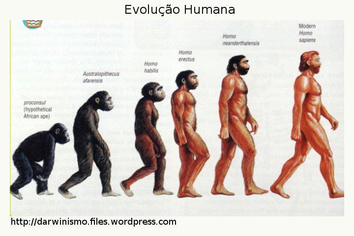 Resultado de imagem para evolução do homem de darwin