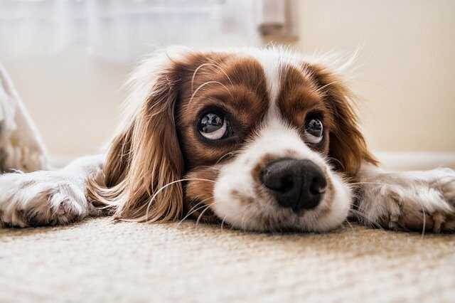 dog puppy images free download