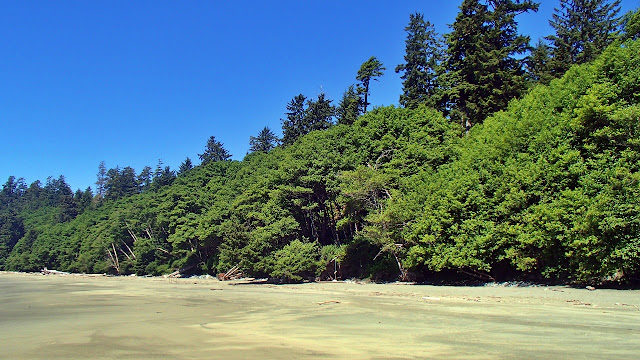 White sand and thick vegetation of Vancouver Island's outer beaches...
