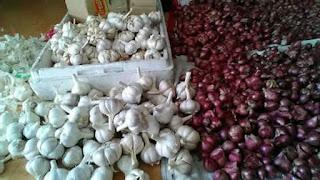 Manfaat pemberian bawang putih pada ayam bangkok aduan