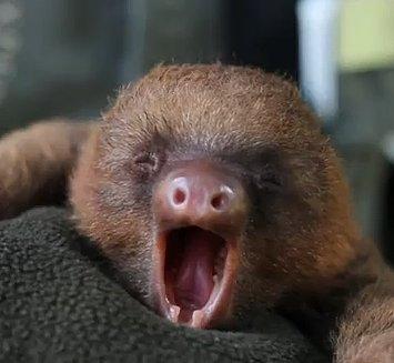 theKONGBLOG™: Baby Sloth Nursery